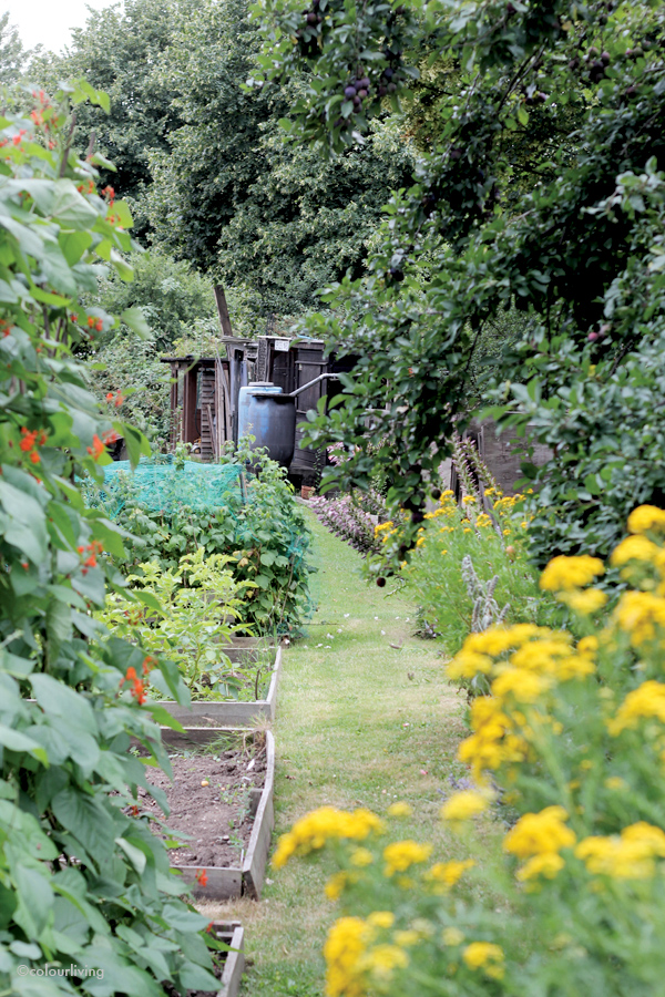 Hook Farm allotment - colourliving