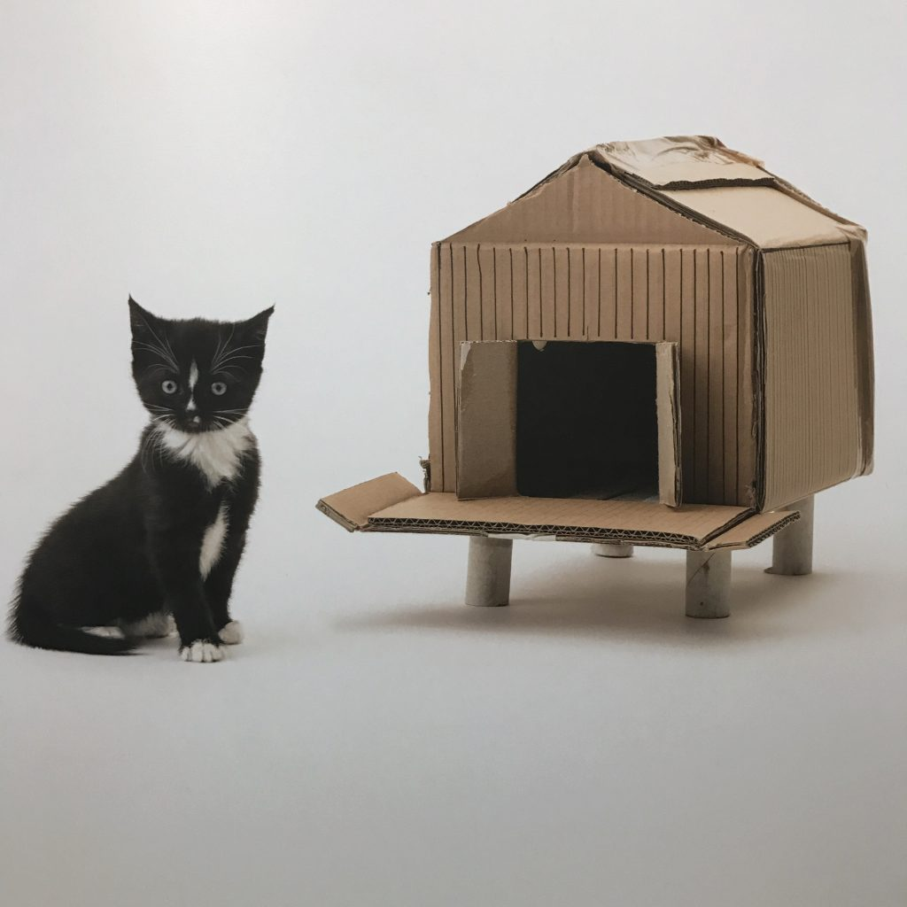 Estate Agents for Cats//Colourliving blog
